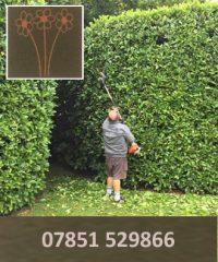 Alex Boyce Garden Services