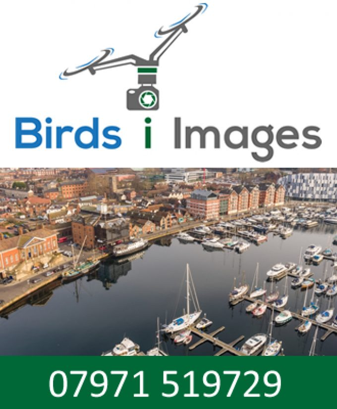 Birds i Images