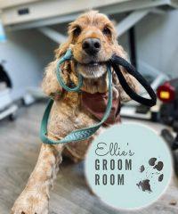 Ellie's Groom Room