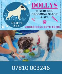 Ipswich Dog Daycare Creche Ltd
