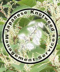 JKMSL (Japanese Knotweed Management Services)