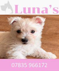 Luna's Microchipping & Pet Pregnancy Ultrasound LTD