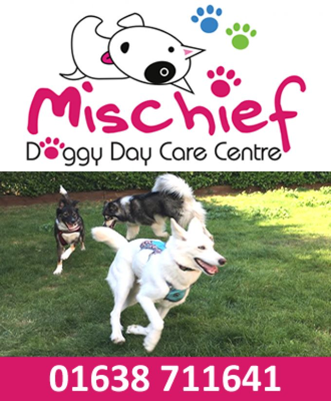 Mischief Doggy Daycare Centre; Pet Sitters