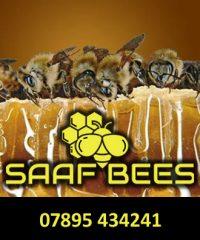 SAAF Bees