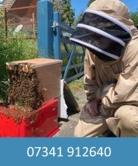 Suffolk Busy Bees